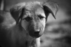 Zeer droevige ogen in zulk een leuke puppy Zwart-wit portret royalty-vrije stock foto