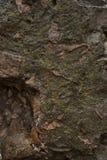 Zeer gedetailleerd en echt natte muur na regen De textuur van de steen stock fotografie
