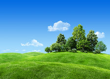 Zeer gedetailleerde bomen 7000px op heuvel Stock Afbeeldingen
