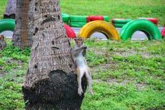 Zeer grappige aapzitting op een palm Stock Foto
