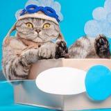Zeer grappige en leuke kat proef, als een werkgever stock foto's