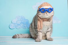 Zeer grappige kat proef van een vliegtuig met glazen en de hoed van een loods, tegen een achtergrond van wolken Een concept grapp royalty-vrije stock foto's