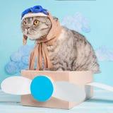 Zeer grappige kat proef van een vliegtuig met glazen en de de hoedenzitting van een loods op een vliegtuig, tegen de achtergrond  stock afbeeldingen