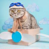 Zeer grappige kat proef van een vliegtuig met glazen en de de hoedenzitting van een loods op een vliegtuig, tegen de achtergrond  royalty-vrije stock afbeelding
