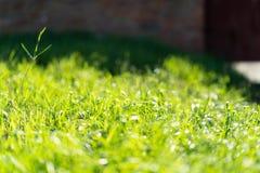 Zeer groen en vers gras Symbool van versheid en natuurlijk Helderheid en tintkleur De mening van de close-up royalty-vrije stock foto's