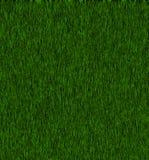 Zeer groen gras Royalty-vrije Stock Afbeeldingen