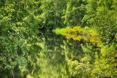 Zeer groen hout dat in water wordt weerspiegeld Royalty-vrije Stock Fotografie