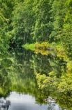 Zeer groen hout dat in water wordt weerspiegeld Stock Afbeeldingen