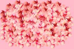 Zeer grote bos van bevlekte orchideebloemen royalty-vrije stock foto's