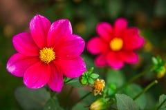 Zeer het mooie bloem natuurlijk bloeien, helder, groen, aard Stock Afbeeldingen