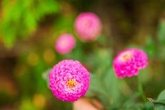 Zeer het mooie bloem natuurlijk bloeien, helder, groen, aard Stock Fotografie