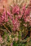 Zeer het mooie bloem natuurlijk bloeien, helder, groen, aard Royalty-vrije Stock Foto