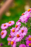Zeer het mooie bloem natuurlijk bloeien, helder, groen, aard Royalty-vrije Stock Fotografie