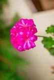 Zeer het mooie bloem natuurlijk bloeien, helder, groen, aard Royalty-vrije Stock Afbeelding