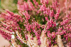 Zeer het mooie bloem natuurlijk bloeien, helder, groen, aard Stock Afbeelding