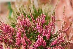 Zeer het mooie bloem natuurlijk bloeien, helder, groen, aard Stock Foto's