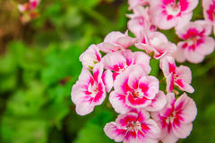 Zeer het mooie bloem natuurlijk bloeien, helder, groen, aard Royalty-vrije Stock Afbeeldingen