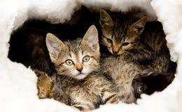Zeer kleine kleurrijke katjes Royalty-vrije Stock Afbeelding