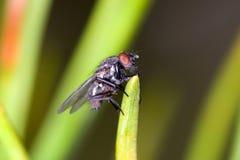 Zeer kleine vlieg op gras royalty-vrije stock foto's