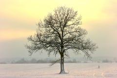 Zeer koude februari-middag in Litouwen royalty-vrije stock foto