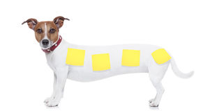Zeer lange hond Stock Foto