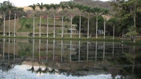 Zeer lange palmen die in het meer nadenken royalty-vrije stock afbeelding