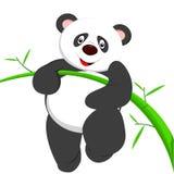 Zeer leuke panda die bamboe beklimmen Royalty-vrije Stock Foto