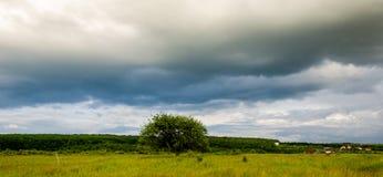 Zeer mooi de zomerlandschap Boom op een gebied met donkere wolk Stock Foto
