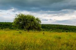 Zeer mooi de zomerlandschap Boom op een gebied met donkere wolk Stock Foto's