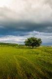 Zeer mooi de zomerlandschap Boom op een gebied met donkere wolk Royalty-vrije Stock Afbeelding