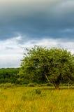 Zeer mooi de zomerlandschap Boom op een gebied met donkere wolk Stock Afbeelding