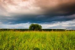 Zeer mooi de zomerlandschap Boom op een gebied met donkere wolk Royalty-vrije Stock Foto's