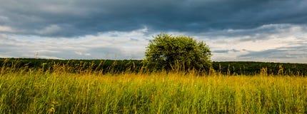 Zeer mooi de zomerlandschap Boom op een gebied met donkere wolk Stock Fotografie