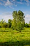 Zeer mooi de zomerlandschap Boom op een gebied met donkere wolk Royalty-vrije Stock Afbeeldingen