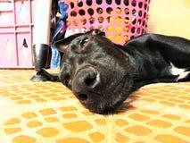 Zeer mooi puppy van de familie stock fotografie
