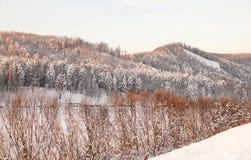 Zeer mooi snow-covered bos bij zonsondergang Ijzige de winterdag Royalty-vrije Stock Fotografie