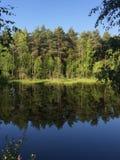 Zeer mooi zonnig die meer, bos in het water wordt weerspiegeld royalty-vrije stock fotografie