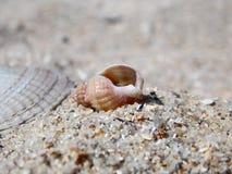 Zeer mooie shell op het zand royalty-vrije stock foto's