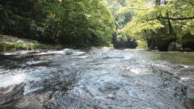 Zeer ondiepe rivier stock footage