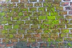 Zeer oude bakstenen muur met vorm en mos stock afbeeldingen