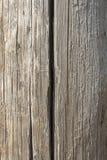 Zeer oude eiken raad Stock Fotografie