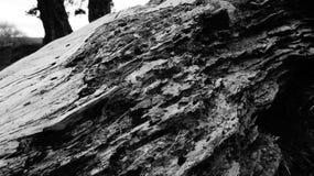 Zeer oude rottende boom op het landbouwbedrijf van Nieuw Zeeland royalty-vrije stock foto