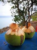 Zeer vers jong kokosnotenfruit Stock Foto's