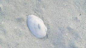 Zeeschelp die op zand bij de zomer overzees strand liggen Shell op zandige oceaanstrand dichte omhooggaand stock video