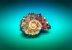 Zeeschelp in een spiraal wordt gesponnen die Royalty-vrije Stock Foto