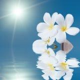 Zeeschelp en bloem in het overzees Royalty-vrije Stock Afbeelding