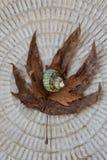 Zeeschelp en de herfstbladeren stock afbeeldingen