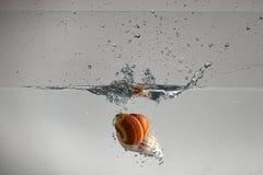 Zeeschelp het dalen in water het maken stock foto