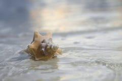 Zeeschelp in het overzees op zonsopgangachtergrond stock afbeeldingen