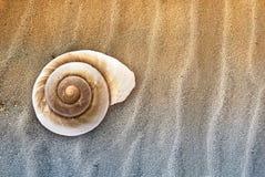 Zeeschelp in het zand. Royalty-vrije Stock Foto